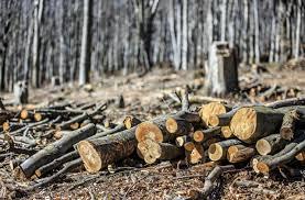 Imagem que representa o desmatamento