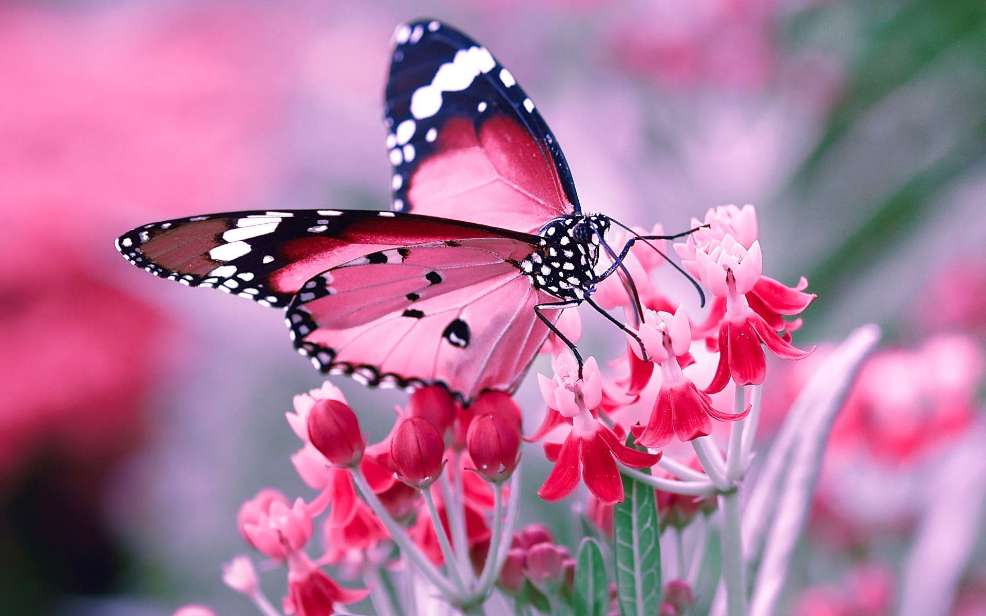 butterfly-wallpaper-high-quality-For-Desktop-Wallpaper.jpg